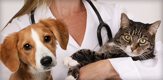 Veterinarian holding a dog and cat.